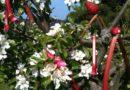 Rabarbertræ