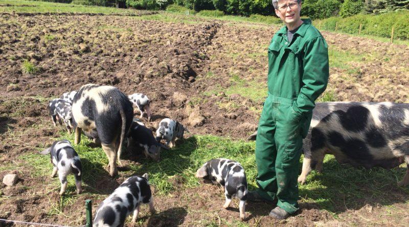 Rikke og grisene